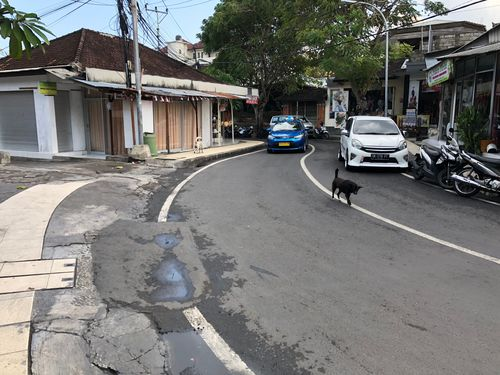 The relationship between dogs and humans in Bali is different to western cultures. The dogs have a lot more freedom and this can leave them vulnerable to being captured and tortured in the dogma trade.