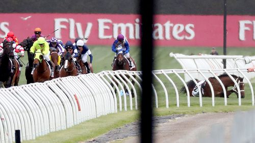 Regal Monarch ridden by Joao Moreira is seen after a fall in race four of the Melbourne Cup day. (AAP)