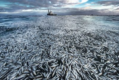 'Net loss'. Category: Oceans - The Bigger Picture. Highly commended.