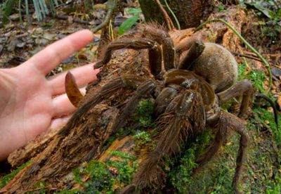 Researcher who found 'puppy-sized spider' receives death threats