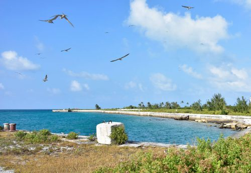 This file photo from June 2018 shows the rare sea birds on the island.