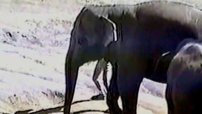9Now David Salmakos elephant attack Bear Grylls Survival Caught on Camera