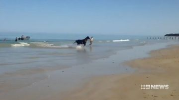 Adelaide Moana beach runaway horse