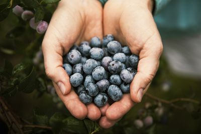 <strong>Blueberries</strong>