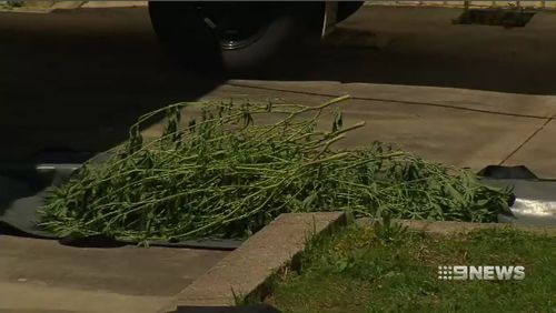 Authorities examining the home today uncovered Cannabis plants at the property.