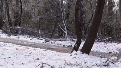 Snow covers burnt bushland