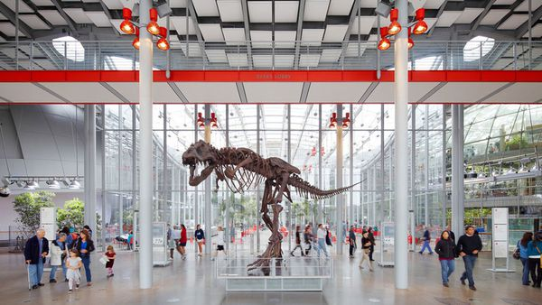 T. rex skeleton at main entrance of California Academy of Sciences in Golden Gate Park.