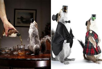 Taxidermy beer