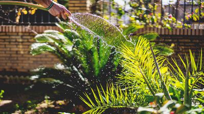 How to keep your garden alive during summer's extreme weather