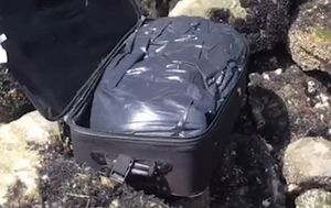 Teens on TikTok discover abandoned suitcase stuffed with human remains on Seattle beach