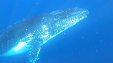 The Government announcement which has scientists concerned about our whales