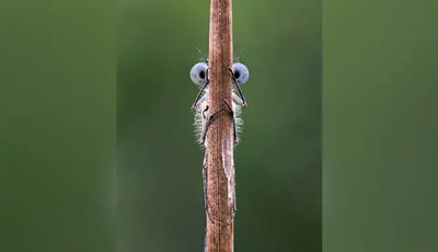 'It was only later I realised how much the damselfly looks like one of the Muppets'