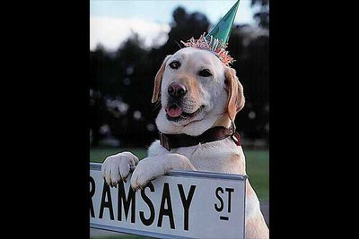 Good neighbours' dogs become good friends' dogs. What was the name of the famous Ramsay St Labrador?