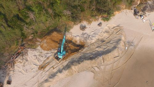 An 18-tonne whale buried at Nobbys beach is being dug up. (PHOTO: AAP)