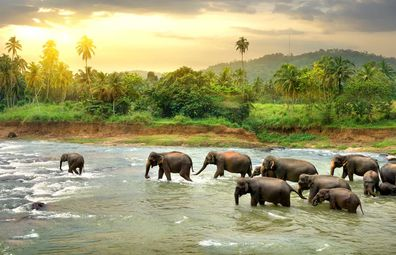 The country is spoiled for amazing wildlife, and you can get up close on a safari.