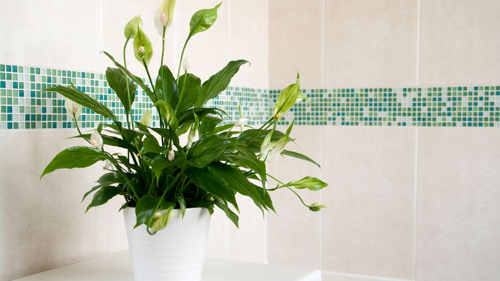Indoor plants look great. They\'re also great for your health