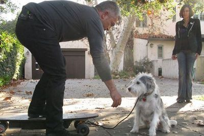 """Reality TV star Cesar Millan actually makes money to train celebrities to become their dogs' """"pack leaders"""". Weird!<br/><br/>Using the theory that dogs operate as pack animals, Cesar uses behaviour modification techniques to rehabilitate naughty dogs. <br/><br/>Forget doggy day care, it's rehab for dogs!"""