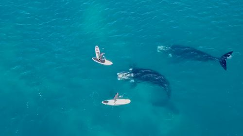 The Woods said the whales were around 20m long.