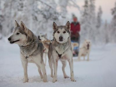 Dog sledging, Norway