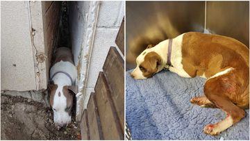 Family dog rescued after five nights trapped between walls