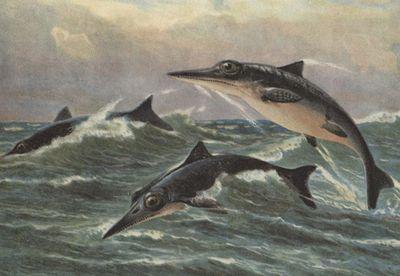 Half-dolphin, half-alligator
