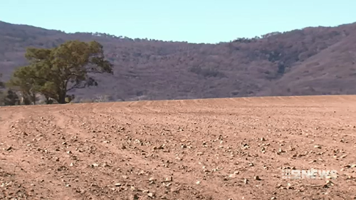 The drought has seen a five per cent reduction in numbers due to the dry conditions and this has forced feed suppliers to drive up the price of grain.