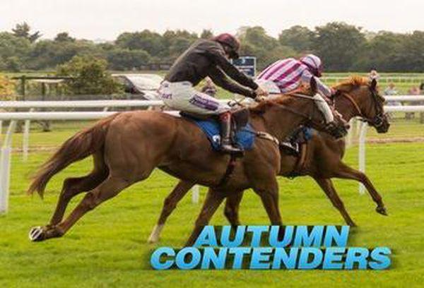 Autumn Contenders