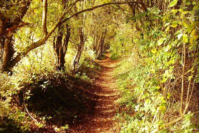 Ancient Holloway in Northamptonshire, England