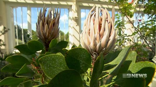 Temperate House has undergone its biggest upgrade since it opened in 1863. (9NEWS)