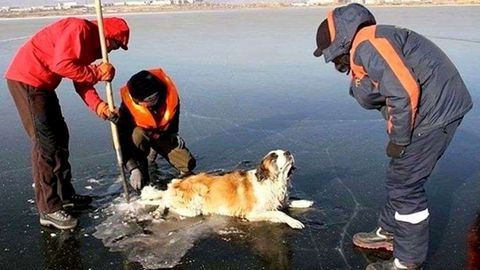 A patrol of firefighters worked to free the dog and take it to safety.