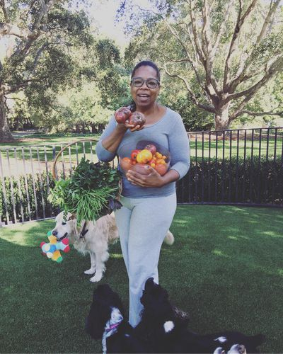 <strong>Oprah loves a fresh tomato</strong>