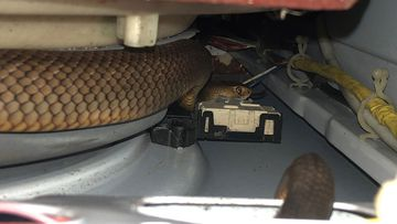 The Eastern Brown snake slithered under the washing machine.