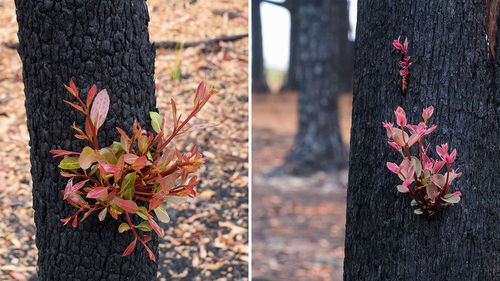 Heartening photos show how the Aussie bush is already regrowing