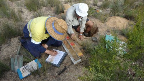 Soil sampling being conducted in the Mitchell Catchment.