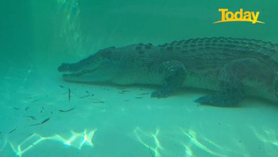 Today reporter Jess Millward comes face-to-face with a crocodile