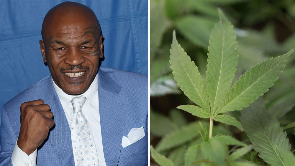 Mike Tyson opens marijuana farm in California