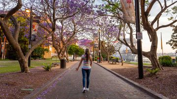 The jacaranda trees at Circular Quay, The Rocks on Sydney Harbour