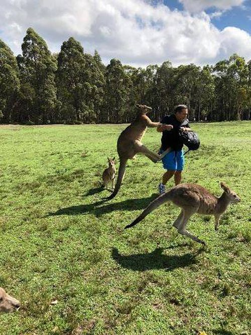 In the video uploaded to Facebook by Lake Macquarie MP Greg Piper, the kangaroos are seen attacking tourists who are feeding them. (Kroosn Shuttle Service Pty Ltd/Facebook)