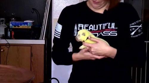 Cão de estimação da família dá à luz filhote de cachorro verde limão