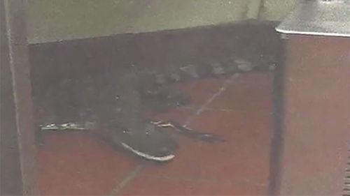 Florida man charged after throwing alligator through Wendy's drive-thru window
