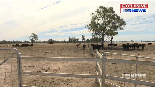 As demand far exceeds supply, grain prices continue to soar. Picture: 9NEWS