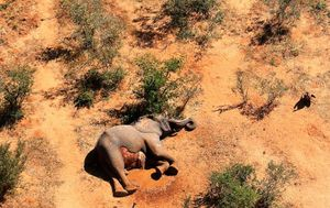 What killed hundreds of elephants in Botswana?