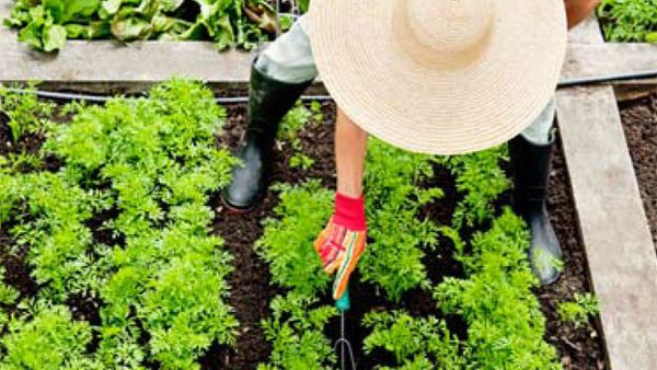 What to do in the garden this month: Your essential tool guide