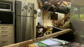 South Australian woman lucky to be alive after tree falls on her house during storms