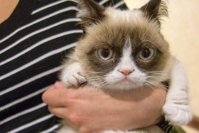 Grumpy Cat:  Tardar Sauce has been paraded for his unhappiness.