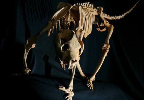 Scarred rock offers new clues about prehistoric Aussie lion