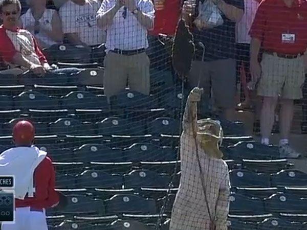Bee swarm halts baseball match