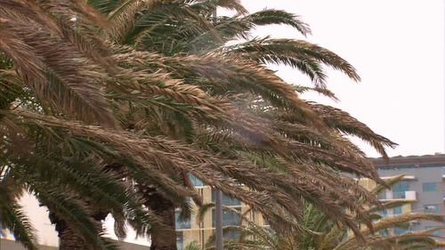 Damaging wind gusts are blasting southern parts of the state. Picture: 9NEWS