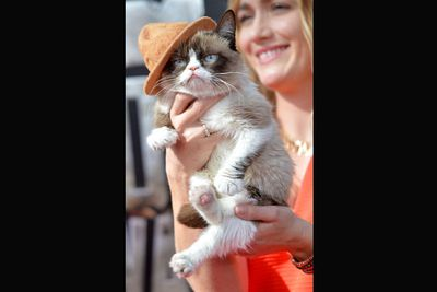Best dressed: Grumpy cat in Pharrell's hat.