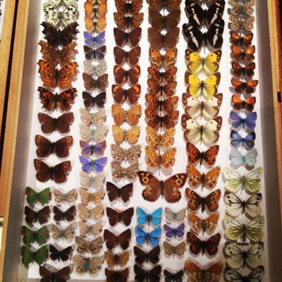 He bought a collection of butterflies